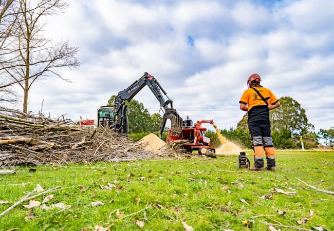 Professional arborists mulching large pile of trees using excavator