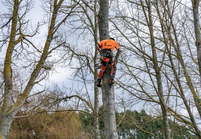 One of our highly skilled team climbing a tree