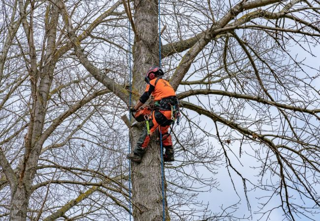Our qualified staff up a tree in Sefton
