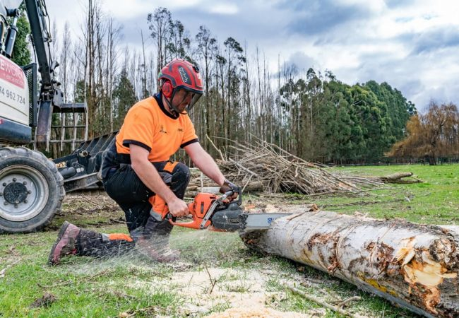 Our professional arborists Cutting logs with Chainsaw