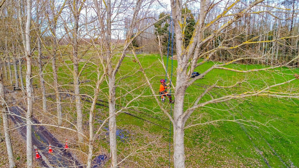 Professional arborists up a tree