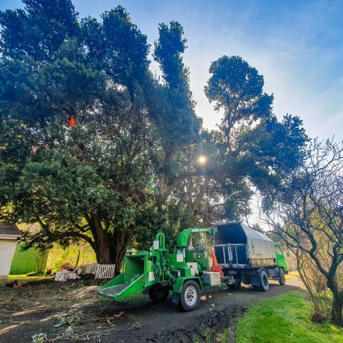 Residential Tree thinning and mulching