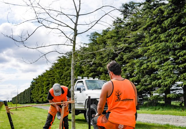 j_g_trees_planting_north_canterbury_small_16-min