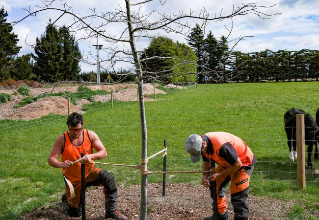 j_g_trees_planting_north_canterbury_small_18-min